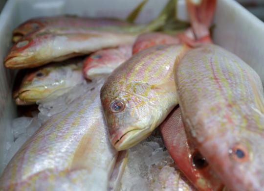 Ministério da Agricultura diz que peixes do Nordeste podem ser consumidos | Uendel Galter | Ag. A TARDE