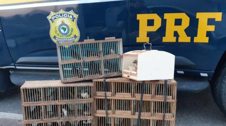 Aves foram encontradas no compartimento de cargas de um ônibus de turismo que seguia de SP para PE   Foto: Divulgação   PRF-BA - Foto: Divulgação   PRF-BA