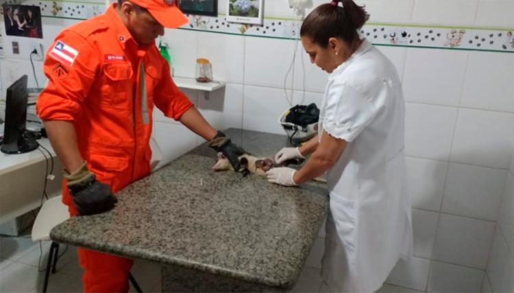 Animais receberam cuidados veterinários e ficaram em observação | Foto: Divulgação | Corpo de Bombeiros
