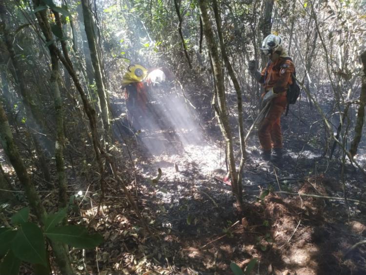 A ação tem o suporte do Programa Bahia Sem Fogo, coordenado pela Secretaria Estadual do Meio Ambiente. - Foto: Divulgação