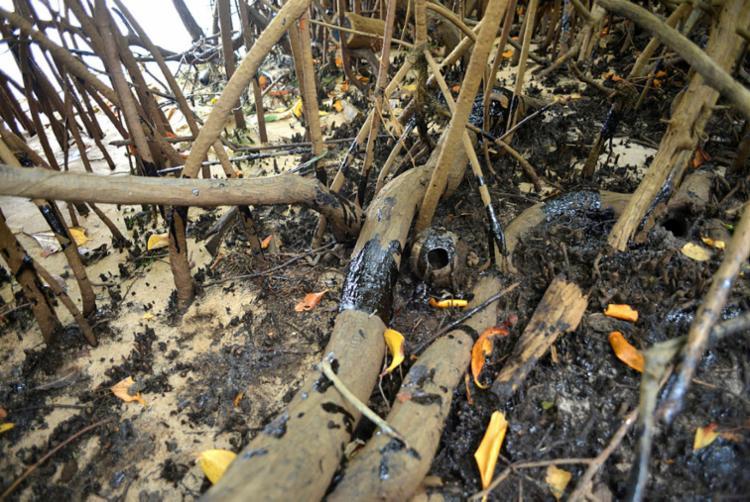 Oleo atingiu pelo menos manguezais localizados no interior baiano | Foto: Shirley Stolze | Ag. A TARDE - Foto: Shirley Stolze | Ag. A TARDE