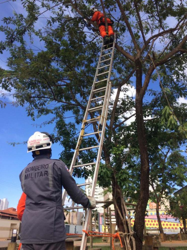 Em Barreiras, um filhote de um gato foi retirado de uma árvore com mais de dez metros de altura | Foto: Divulgação | SSP-BA