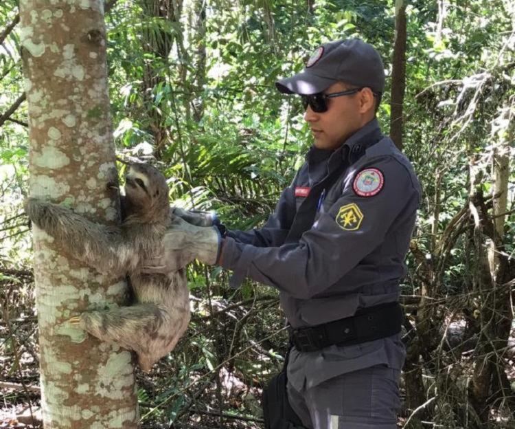 o bicho preguiça foi encaminhado para a reserva natural da Suzano Foto: Divulgação | Corpo de Bombeiros - Foto: Divulgação | Corpo de Bombeiros