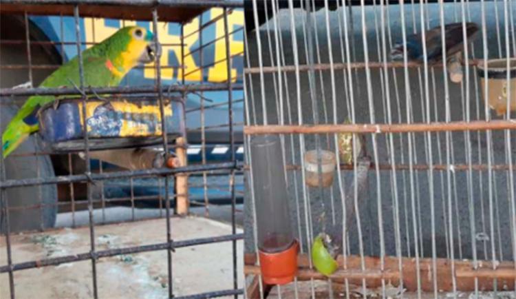 Animais estavam confinados sem autorização do órgão ambiental | Foto: Divulgação | PRF-BA - Foto: Divulgação | PRF-BA
