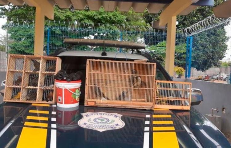 Pássaros foram encaminhados aos cuidados do órgão ambiental   Foto: Divulgação   PRF - Foto: Divulgação   PRF