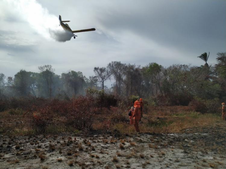 Ao todo, foram identificados 7.855 focos de incêndio na região - Foto: Corpo de Bombeiros | Divulgação