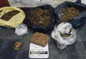 Quatro quilos de maconha são apreendidas em distrito de Feira de Santana | Foto: