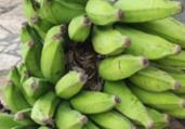Jiboia é resgatada escondida em cacho de bananas | Divulgação | Guarda Civil