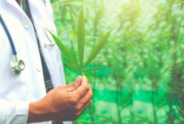 Anvisa libera venda de produtos à base de cannabis | Divulgação | Freepik