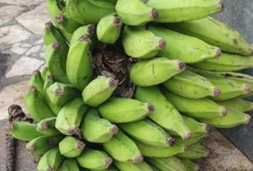 Jiboia é resgatada escondida em cacho de bananas em Salvador | Divulgação | Guarda Civil