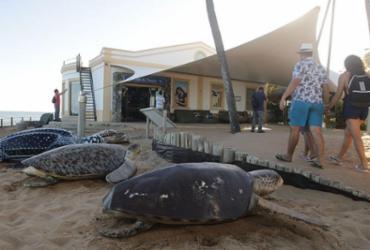 Projeto Tamar comemora 40 anos com 40 milhões de tartarugas soltas | Fernando Frazão | Agência Brasil