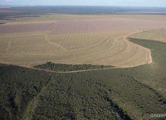 Greenpeace denuncia ações no oeste | Marizilda Cruppe | Greenpeace