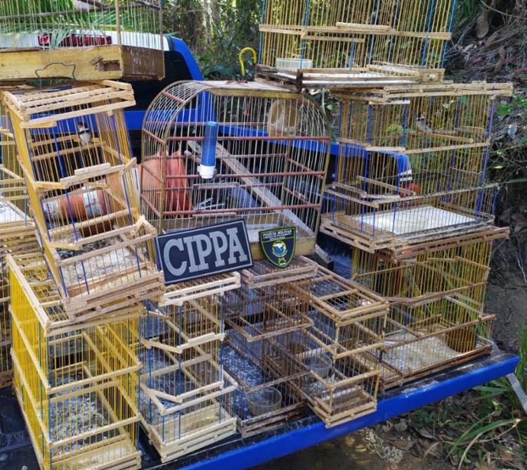 Foram resgatados doze pássaros de espécies diferentes | Foto: Divulgação | SSP - Foto: Divulgação | SSP
