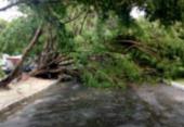 Ventos fortes derrubam árvores e trânsito fica complicado em áreas da Barra e Abaeté | Foto: Transalvador | Twitter