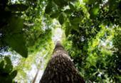 Pesquisa na Amazônia analisa importância da biodiversidade | Foto: Marcelo Camargo | Agência Brasil