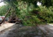 Ventos fortes derrubam árvores na Barra e Abaeté   Transalvador   Twitter