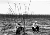Trabalho escravo é tema de exposição em Salvador | Divulgação | MPT
