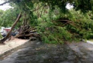 Ventos fortes derrubam árvores e trânsito fica complicado em áreas da Barra e Abaeté | Transalvador | Twitter