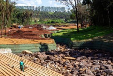 Ações de reflorestamento ainda dão os primeiros passos em Brumadinho | Divulgação Vale | Direitos Reservados