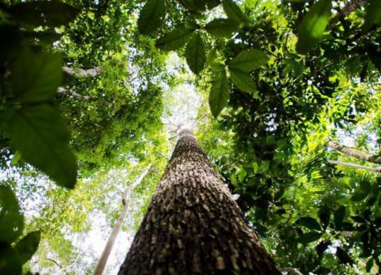 Pesquisa na Amazônia analisa importância da biodiversidade | Marcelo Camargo | Agência Brasil