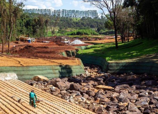 Ações de reflorestamento ainda dão os primeiros passos em Brumadinho   Divulgação Vale   Direitos Reservados