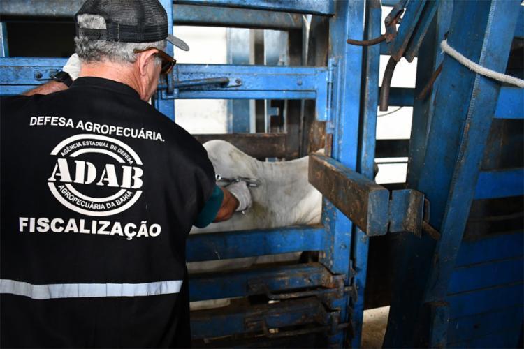 A Adab terá mais chances de verificar a certificação da vacinação do rebanho no sudoeste do estado   Foto: Adab   Ascom - Foto: Adab   Ascom