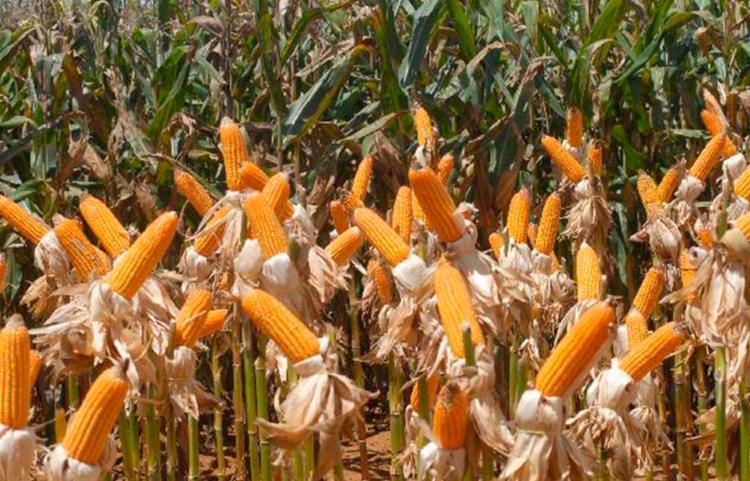 Destaque foi no comércio de milho, carnes e algodão | Foto: Elza Fiúza | Agência Brasil - Foto: Elza Fiúza | Agência Brasil
