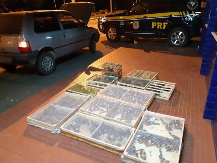 Animais estavam armazenados em 12 gaiolas | Foto: Divulgação | PRF - Foto: Divulgação | PRF