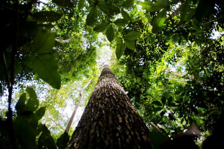 Estudo diz que terra firme é mais rica em número de espécies | Foto: Marcelo Camargo | Agência Brasil - Foto: Marcelo Camargo | Agência Brasil