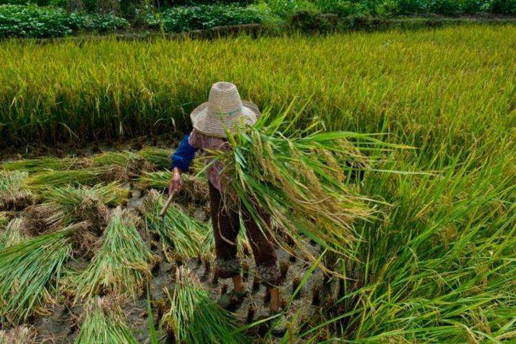 Meio rural continua concentrando o maior número de registros, com 87% dos casos | Foto: Divulgação | Ministério Público do Trabalho - Foto: Divulgação | Ministério Público do Trabalho