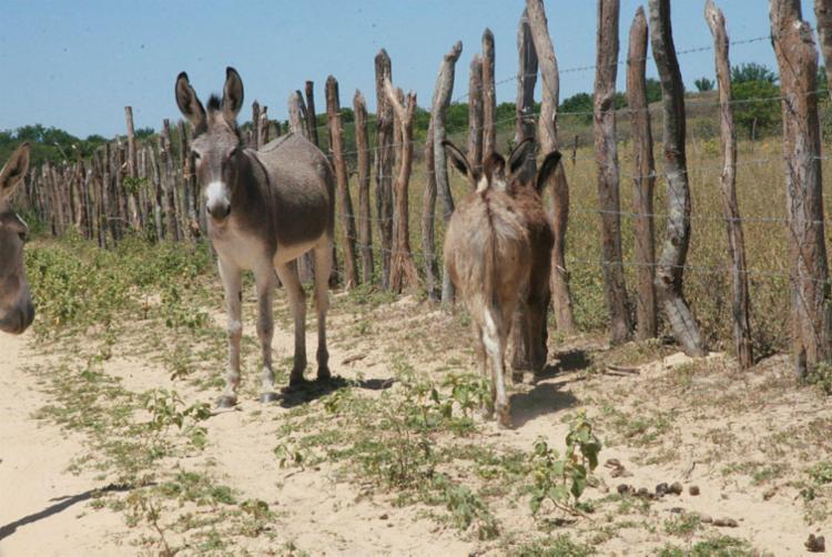 Abate pode tornar os animais extintos em quatro anos | Foto: Miriam Hermes | Ag. A TARDE - Foto: Miriam Hermes | Ag. A TARDE