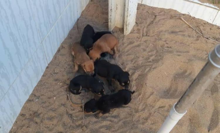 Ação foi realizada em conjunto com a Associação para Proteção dos Animais de Cruz das Almas (Apaca). Dez cachorros (oito filhotes e duas cadelas) estavam sem água e comida | Foto: Divulgação - Foto: Divulgação