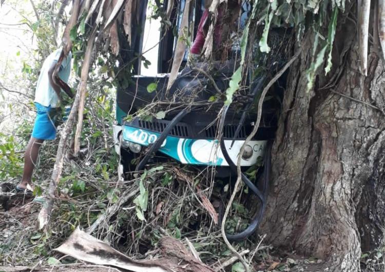 Ônibus parou após se chocar com árvore | Foto: Reprodução | Criativa Online - Foto: Reprodução | Criativa Online