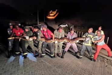 Sucuri de 7 metros é encontrada em Porto Seguro | Divulgação | GBM
