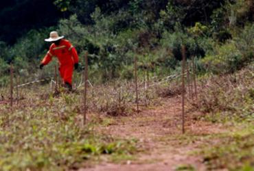 Mariana: estudos mostram caminhos para recuperar solo com rejeitos |