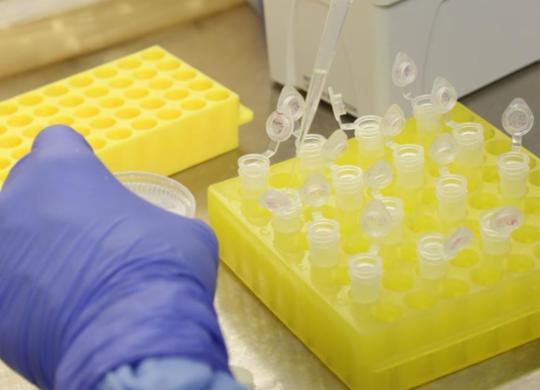 Pessoas que tiveram contato com infectado por covid-19 são monitoradas | Divulgação | Josué Damacena