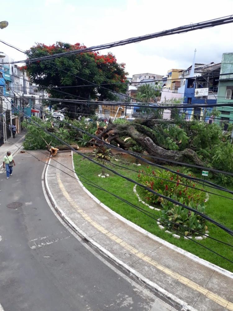 Queda de árvore também interditou parte da via | Foto: Divulgação | Seman - Foto: Divulgação | Seman