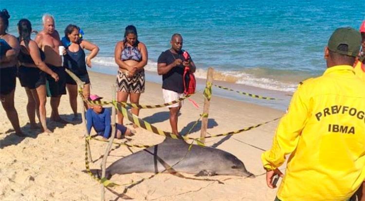 Animal foi retirado da água por banhistas   Foto: Reprodução   Radar 64 - Foto: Reprodução   Radar 64