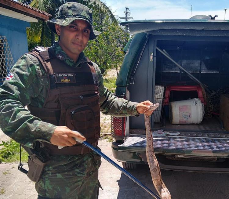 A cobra foi jiboia foi localizada na região de Arembepe, na cidade de Camaçari | Foto: Divulgação | SSP - Foto: Divulgação | SSP