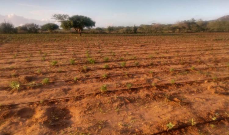 Plantação foi encontrada em Santa Brígida | Divulgação | Polícia Civil - Foto: Divulgação | Polícia Civil
