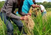 CNA pede apoio do governo para manter abastecimento de alimentos | Foto: Marília Garcia Senlle | ISA