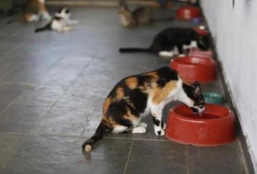 Não se deve usar detergente ou álcool em gel em cães e gatos, alertam veterinários | Luciano Carcará | Ag. A TARDE