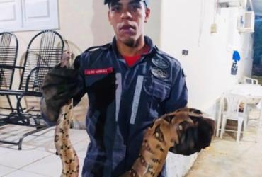 Bombeiros capturam jibóia em quintal de residência em Paulo Afonso | Divulgação | SSP
