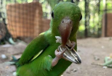 Maior viveiro da América Latina recebe quase 300 aves resgatadas | Divulgação | Viveiro Cecrópia