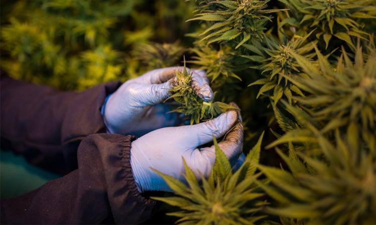 Produto estará disponível em farmácias sem manipulação e em drogarias | Foto: Guillem Sartorio | AFP - Foto: Guillem Sartorio | AFP