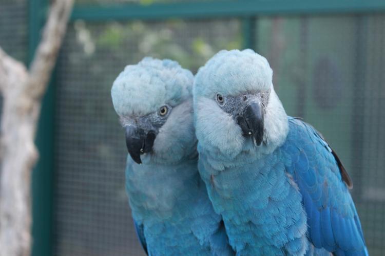 Após 20 anos, as aves voltam a fazer parte do bioma brasileiro | Foto: Camile Lugarini | ICMBio - Foto: Camile Lugarini | ICMBio