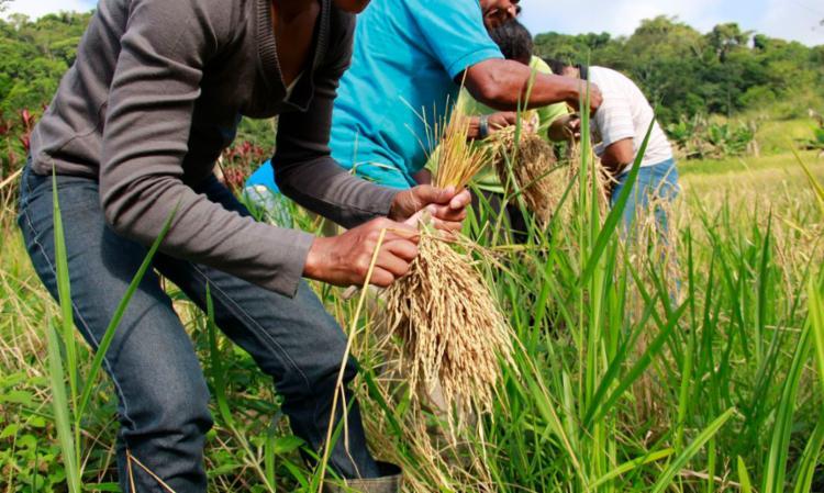 A CNA alega querer assegurar alternativas de renda ao produtor rural para minimizar os impactos da crise | Foto: Marília Garcia Senlle | ISA - Foto: Marília Garcia Senlle | ISA