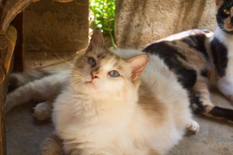 Gatos e cães estarão à espera dos seus novos tutores em feirinha de adoção | Foto: Divulgação - Foto: Divulgação