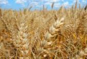 Valor da produção agrícola baiana cai 1,7% entre 2018 e 2019, aponta IBGE | Foto: Divulgação | Embrapa