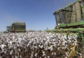 Produtores rurais investem R$ 1,15 mi para combater a Covid-19 na Bahia | Foto: Carlos Casaes | Ag. A TARDE